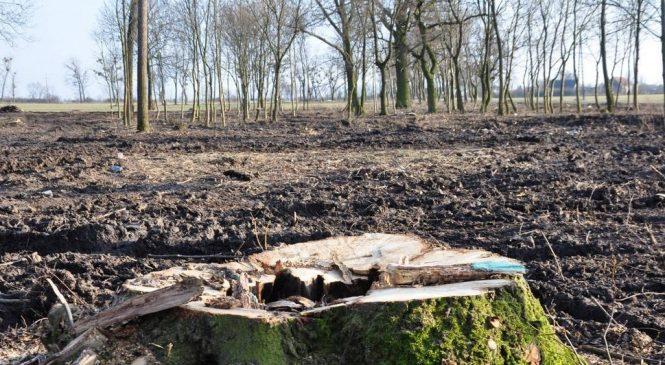 Milion złotych kary za nielegalną wycinkę drzew? Sprawa ponownie rozpatrywana